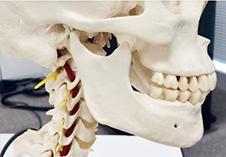 top顎関節